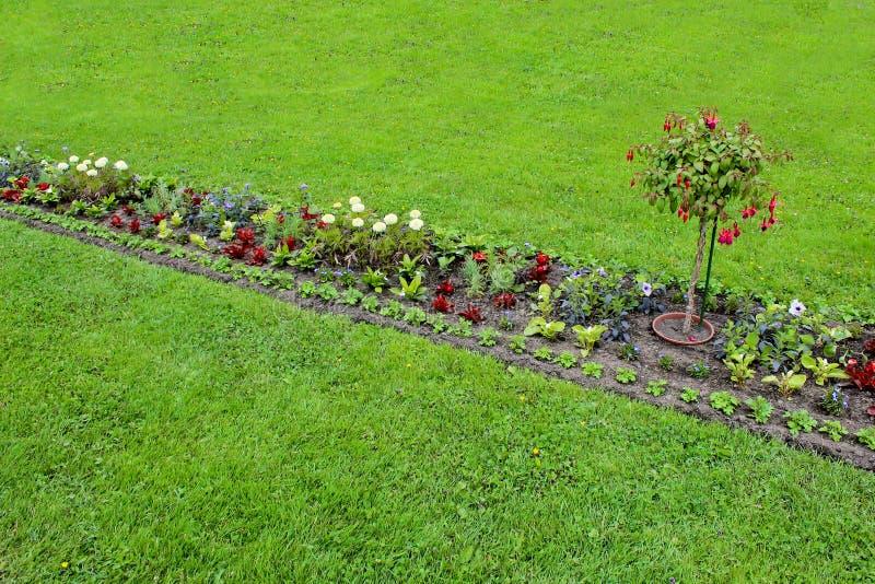 花床五颜六色在春天降下 五颜六色的花园 库存图片