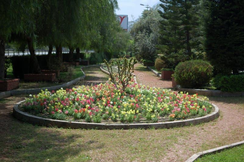 花床在公园 免版税库存照片