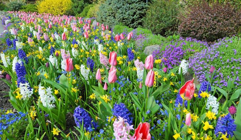 花床在春天有豪华的颜色的,维多利亚,加拿大 免版税库存图片