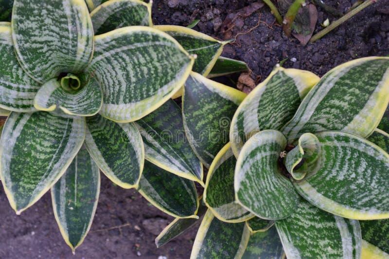 花形状植物 免版税库存图片