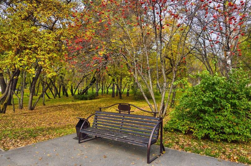 花揪用在一条长凳上的红色莓果在秋天公园 库存照片