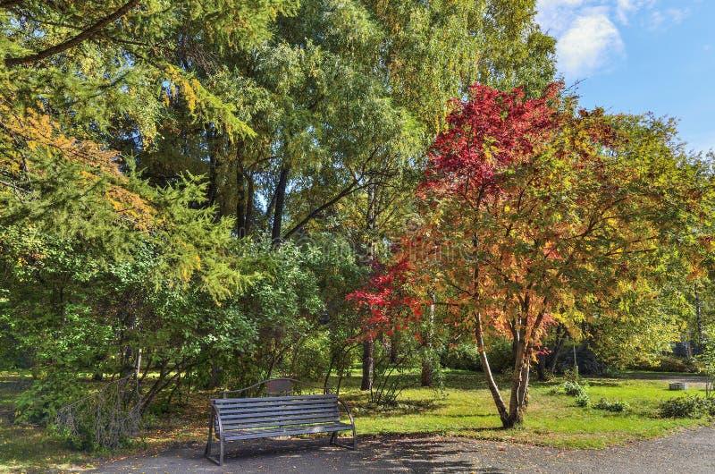 花揪用在一条长凳上的红色莓果在秋天公园 免版税库存照片