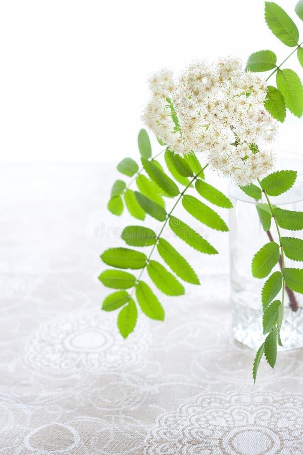 花揪白色开花的分支在透明一杯的容量的在亚麻布仿造了桌布 高关键字 图库摄影