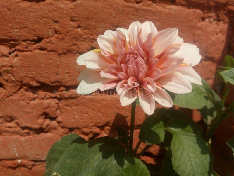 花是美丽的 库存图片