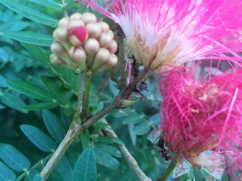花是蜂蜜的来源 免版税图库摄影