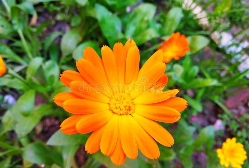 花有绿色背景 免版税库存照片