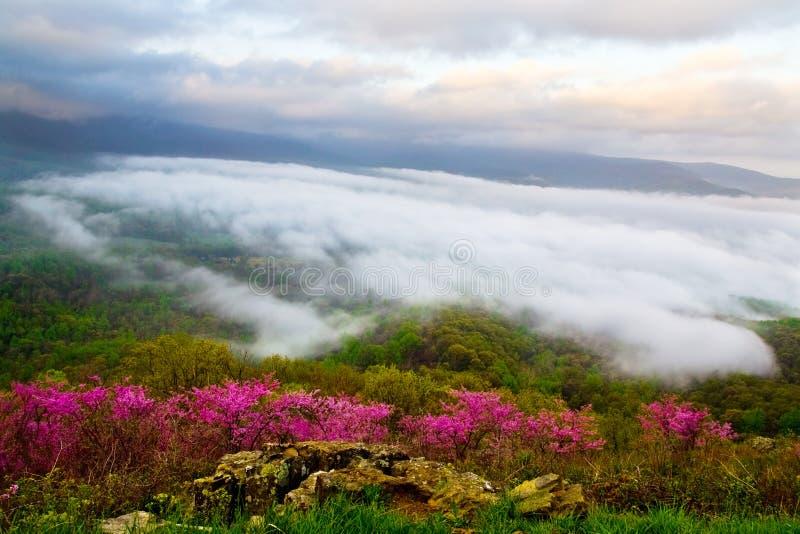 花有雾的草甸 库存图片