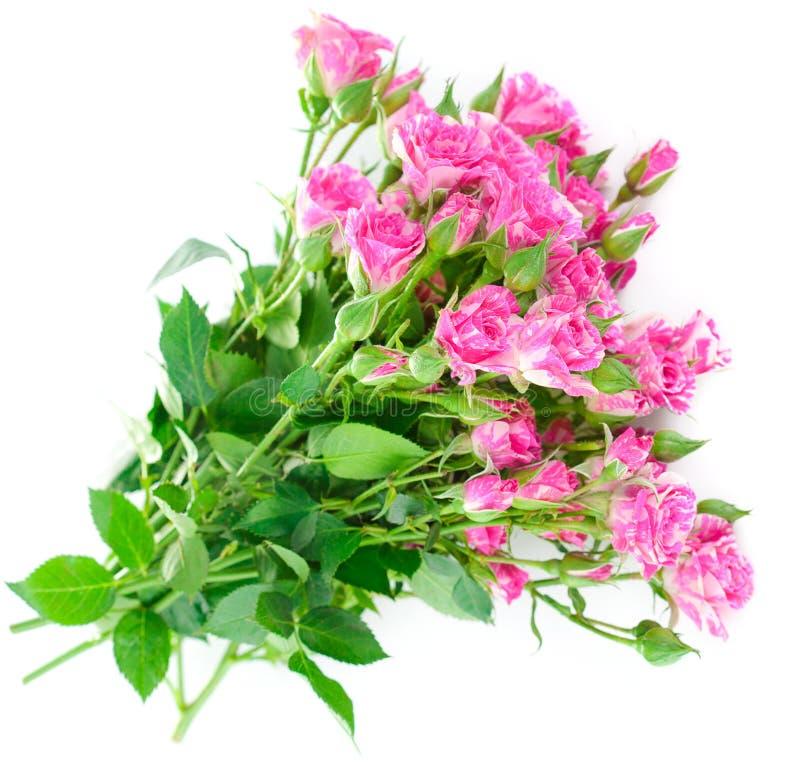 花束与绿色叶子的桃红色玫瑰 免版税库存照片