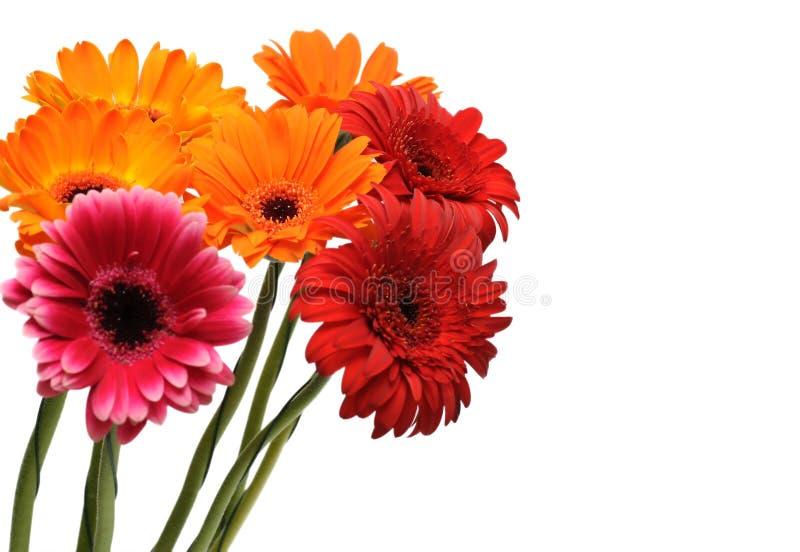 花束五颜六色的gerber 库存图片