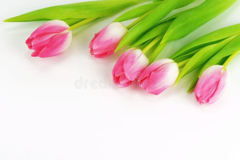 花束在白色背景的美丽的桃红色郁金香 库存图片