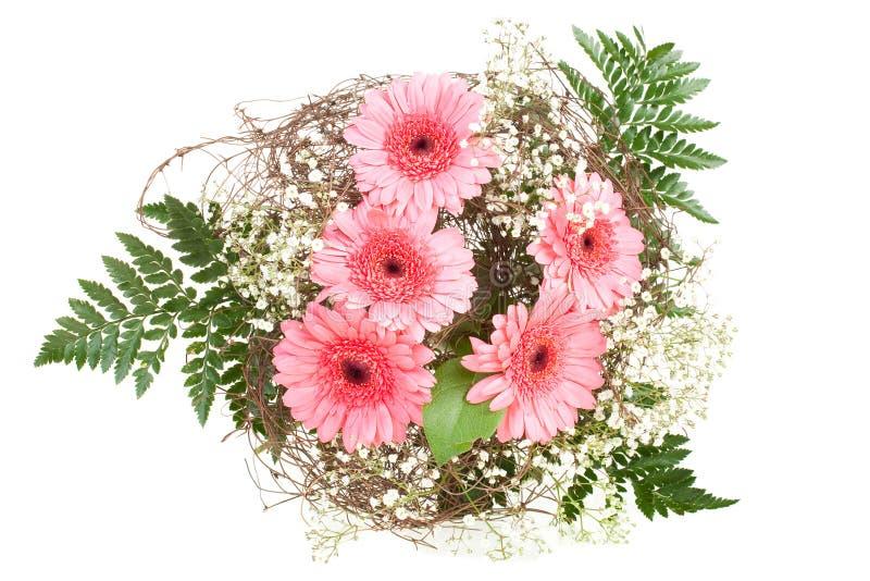 花束大丁草粉红色 库存图片