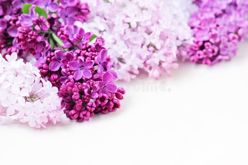花束开花丁香 与五个瓣的花 免版税图库摄影