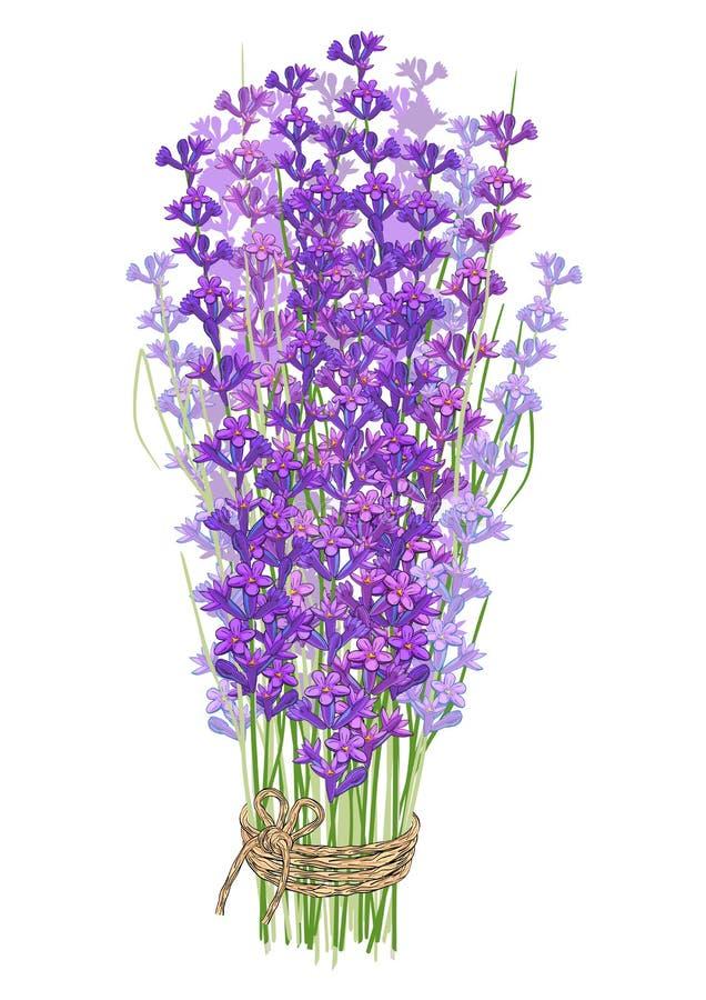 花束淡紫色 向量例证