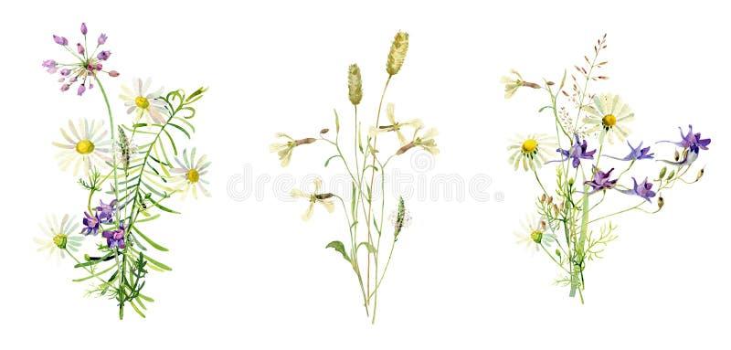 花束狂放,水彩花 向量例证
