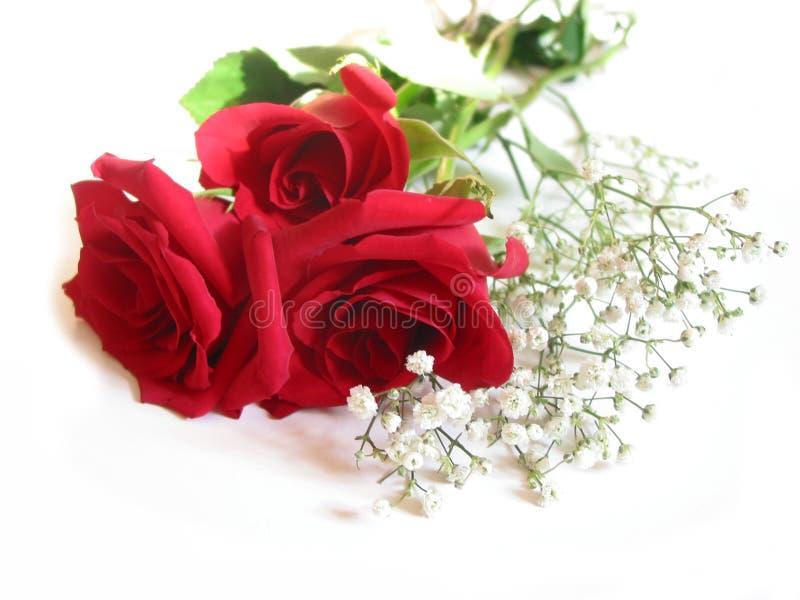 花束玫瑰白色 免版税库存照片