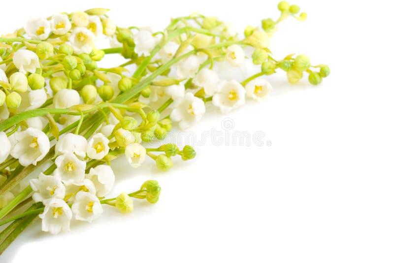 花束百合谷 图库摄影