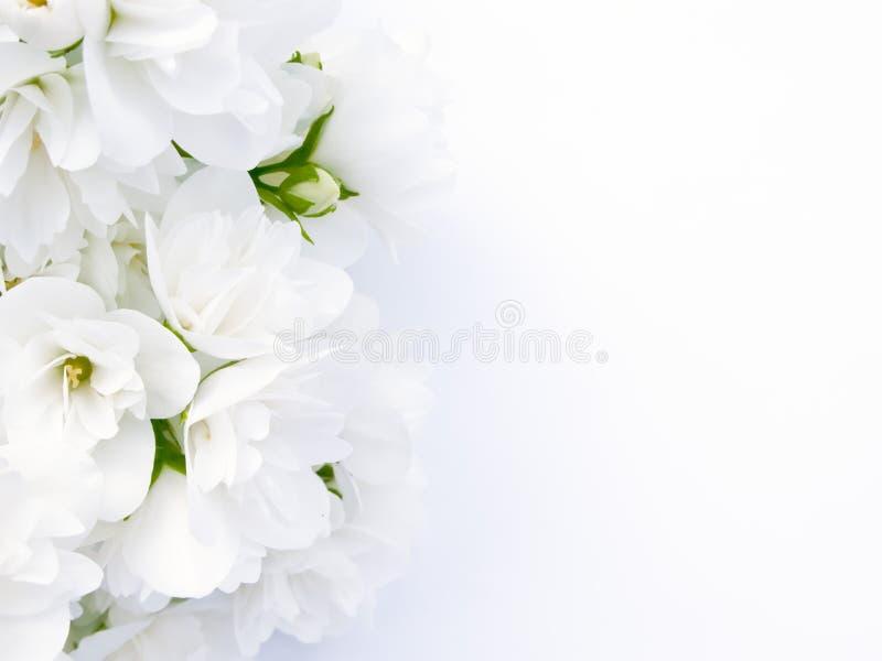 花束茉莉花 库存图片
