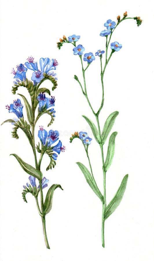 花束野花,水彩,样式 库存例证