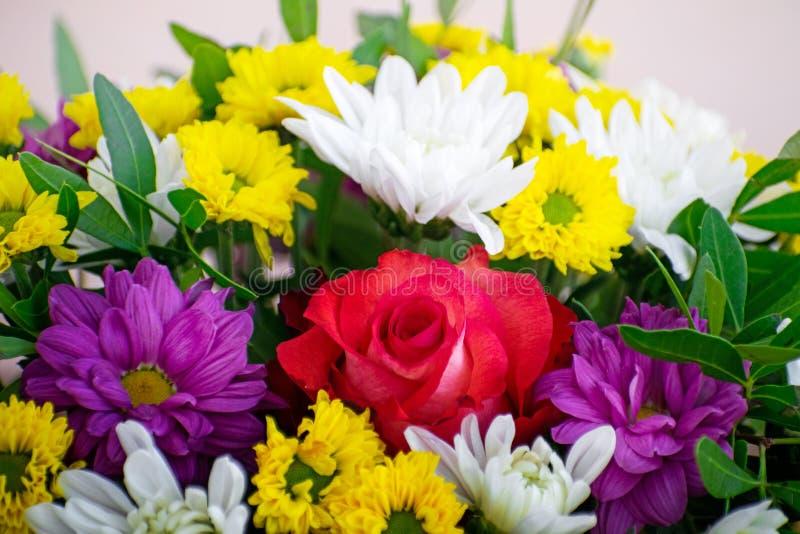 花束:桃红色玫瑰和多彩多姿的菊花 免版税图库摄影
