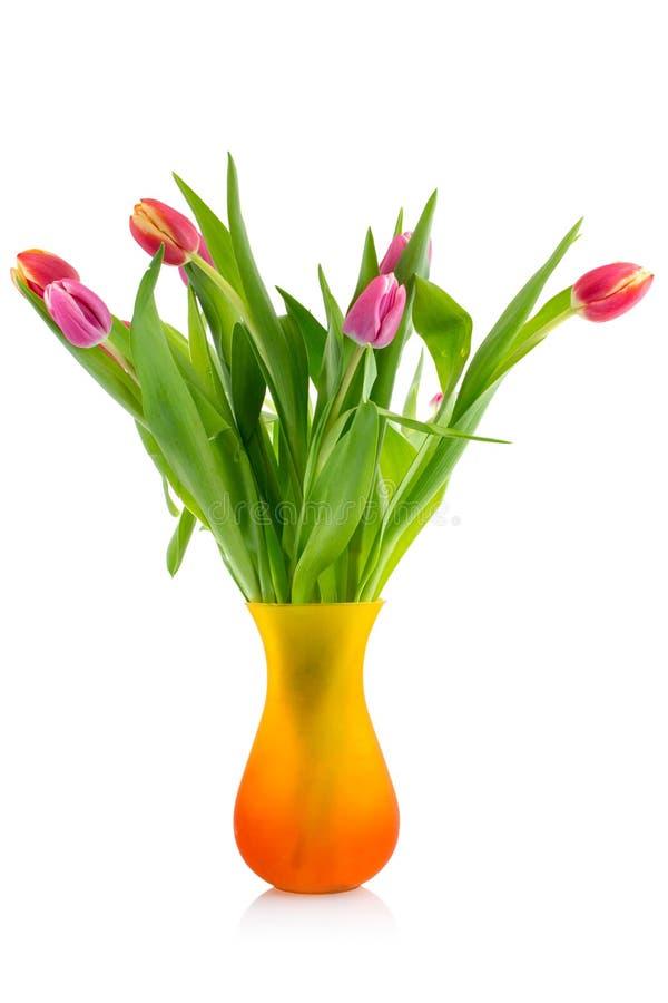 花束玻璃郁金香花瓶 库存图片