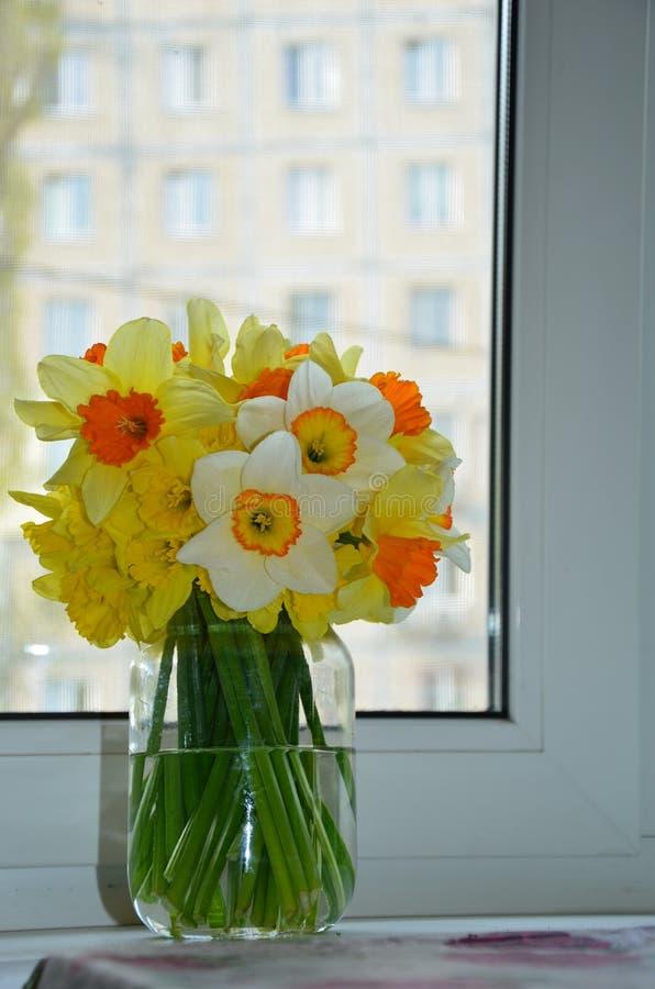 水仙花束 库存图片