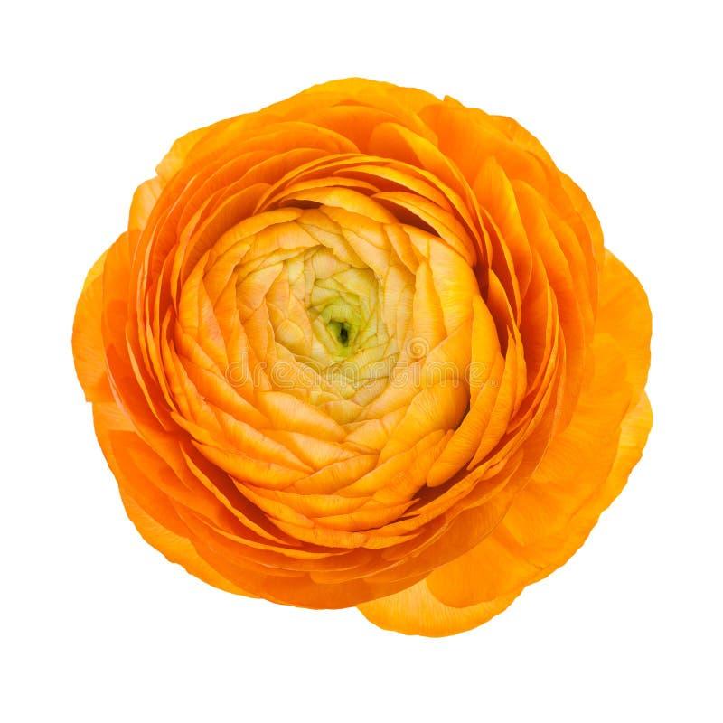 花查出的橙色白色 库存照片