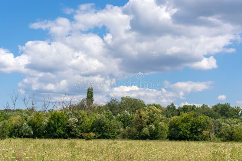 花树的领域反对蓝天的与云彩 免版税库存照片
