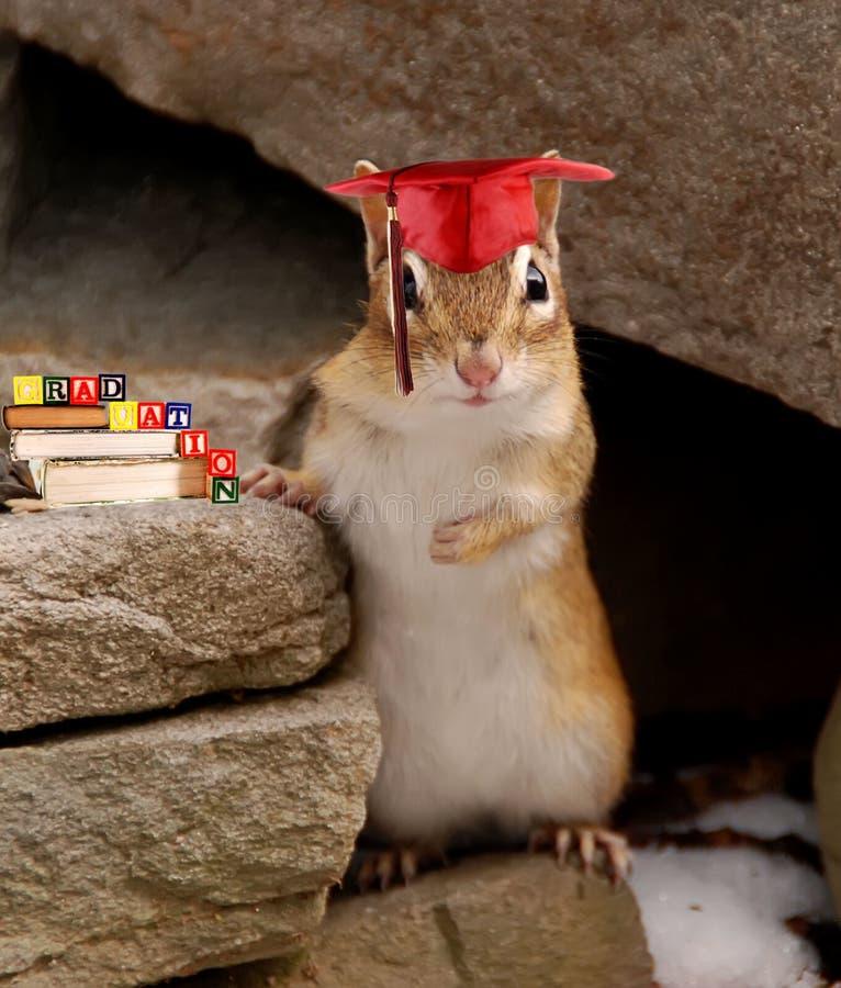 花栗鼠毕业 免版税库存照片