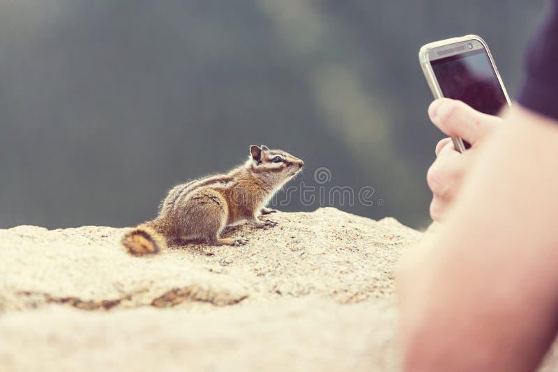 花栗鼠 岩石的山 免版税库存图片