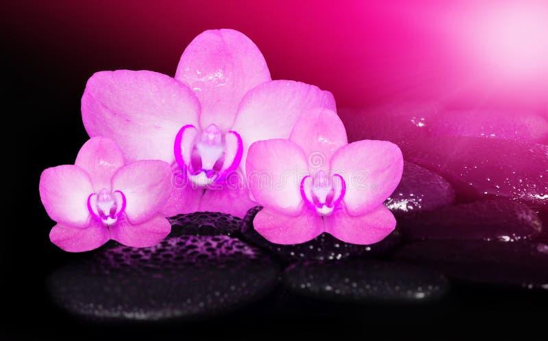 花桃红色兰花和黑石头 免版税库存照片