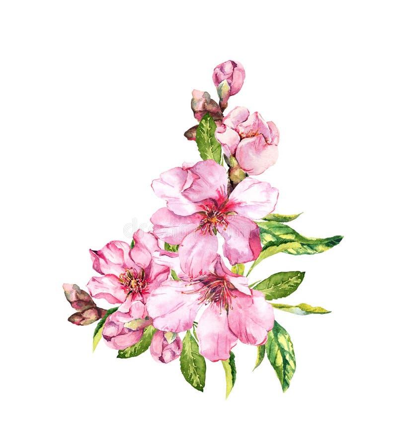 花桃红色春天 樱花,杏仁,苹果,佐仓 水彩 向量例证