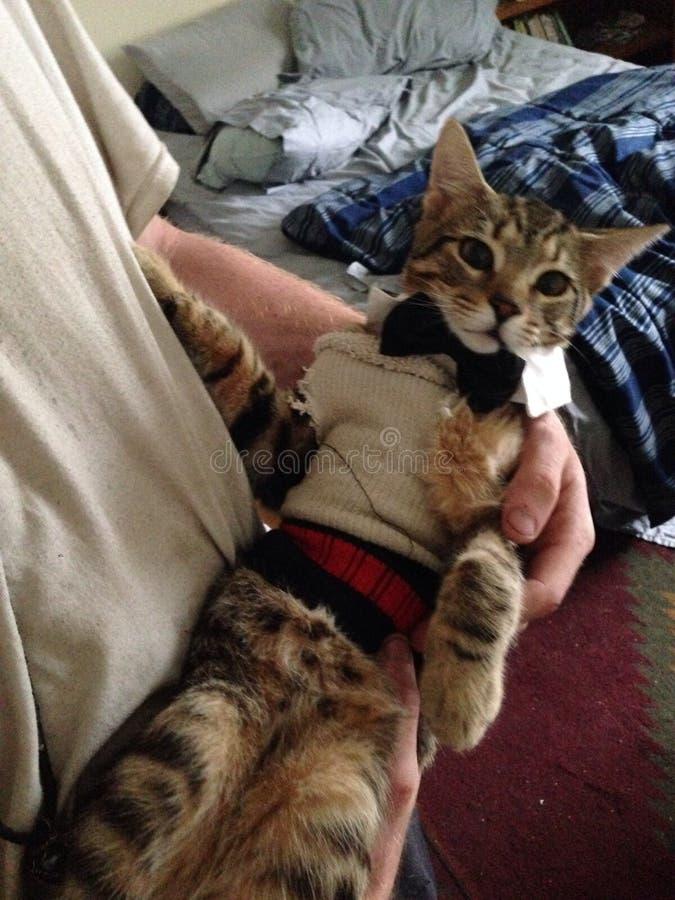 花梢小猫 免版税库存图片