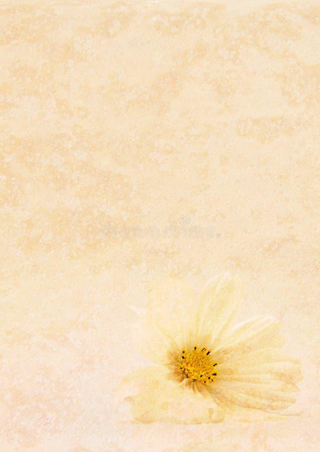 花棕褐色的纹理白色 免版税库存图片