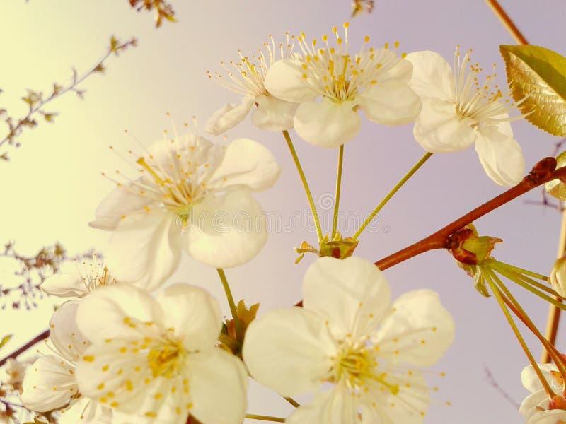 花森林春天白色 免版税库存照片