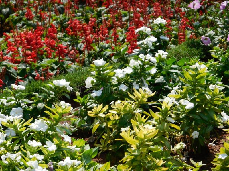 花植物在庭院里 库存图片