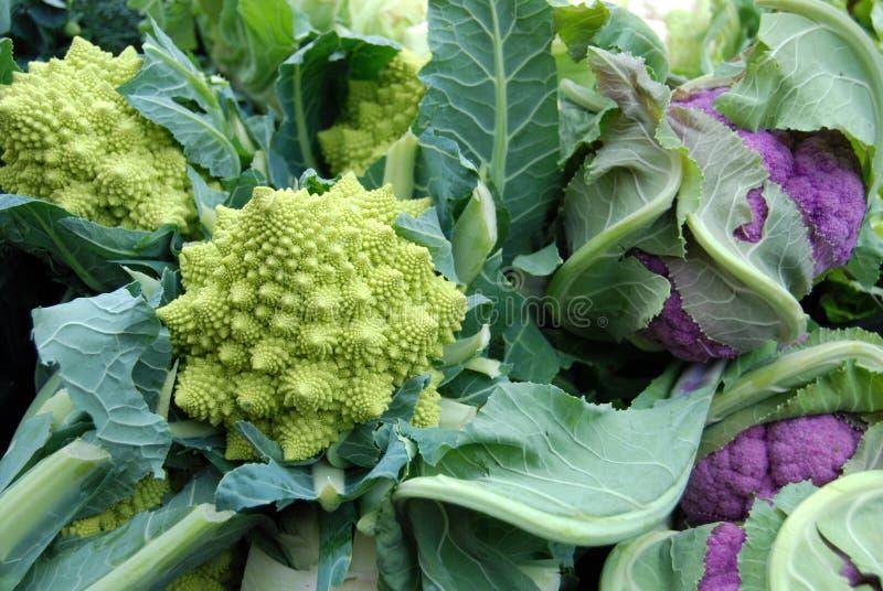 花椰菜绿色紫色 免版税库存图片