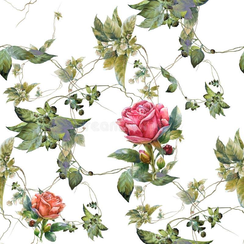 花水彩绘画,上升了,在白色背景的无缝的样式 向量例证