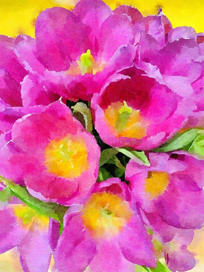 花水彩绘画  桃红色和黄色郁金香 向量例证
