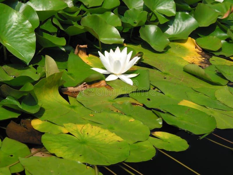 Download 花水 库存图片. 图片 包括有 颜色, 庭院, 春天, 生动, 绿色, 相当, 本质, 和平, 唯一, 空白 - 180403