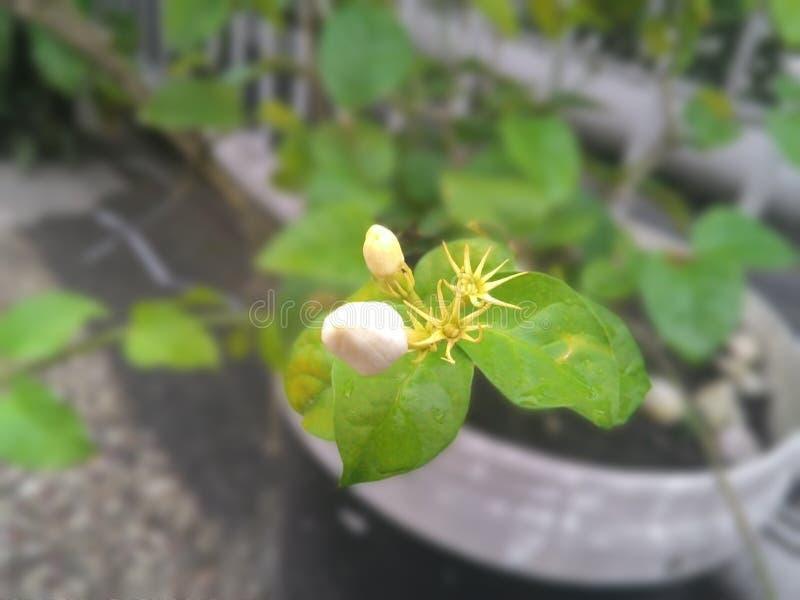 花汇集在庭院里 库存照片