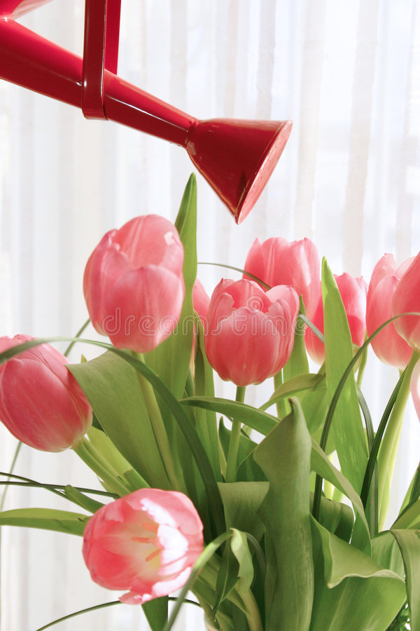 花浇灌 免版税库存图片