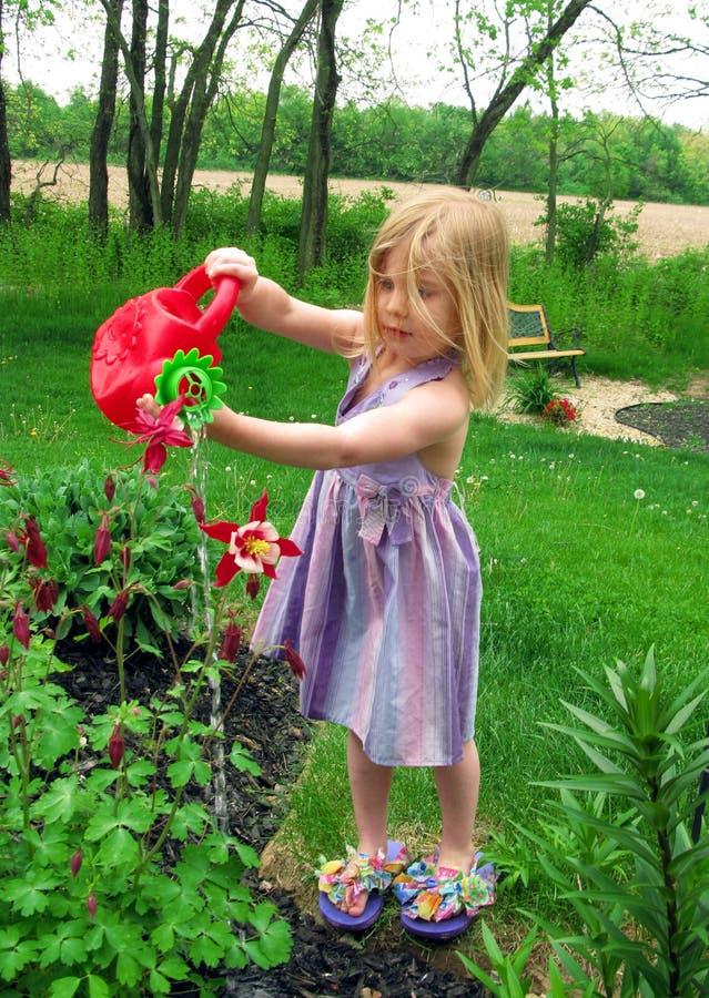 花浇灌 免版税图库摄影