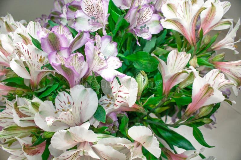 花淡紫色白色德国锥脚形酒杯花束  图库摄影
