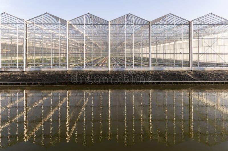 花温室在Maasdijk荷兰 库存照片