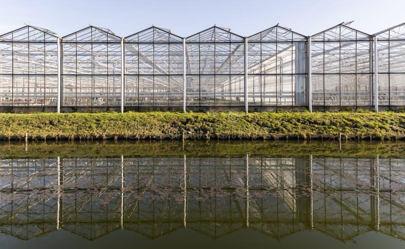 花温室在Maasdijk韦斯特兰 免版税库存照片