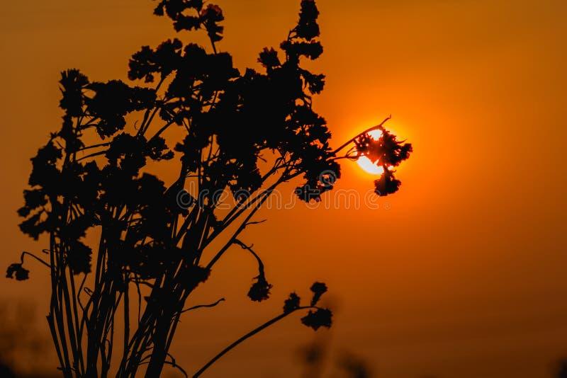 花现出轮廓与在天空背景的日落 免版税库存图片