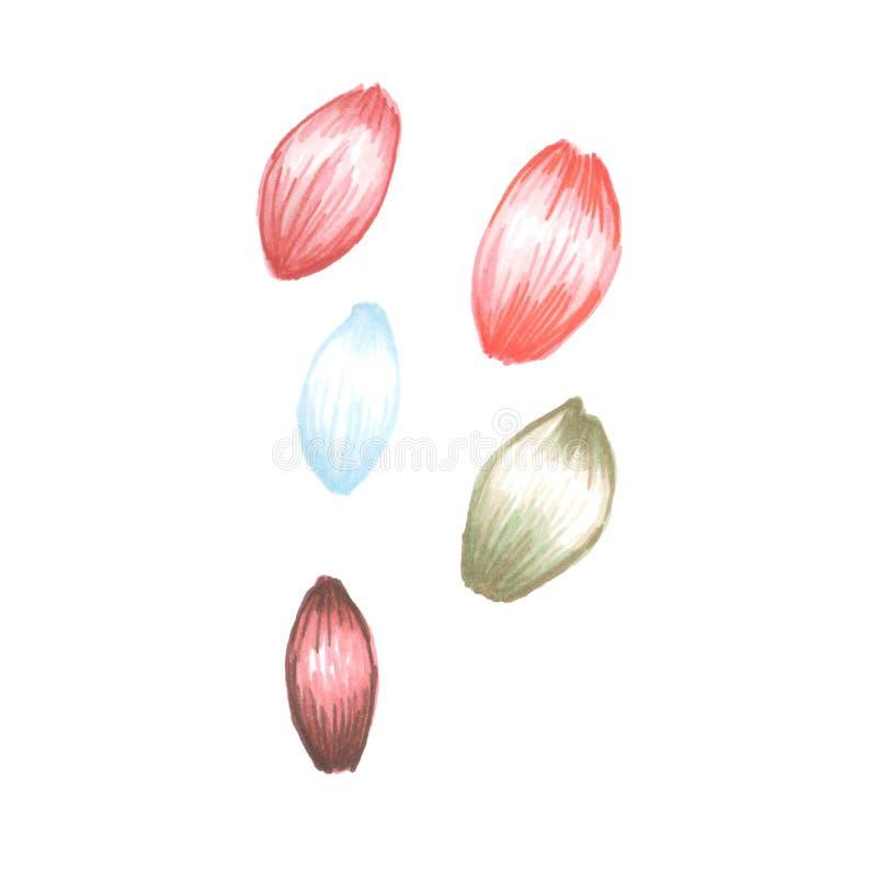 花瓣的例证 免版税库存照片