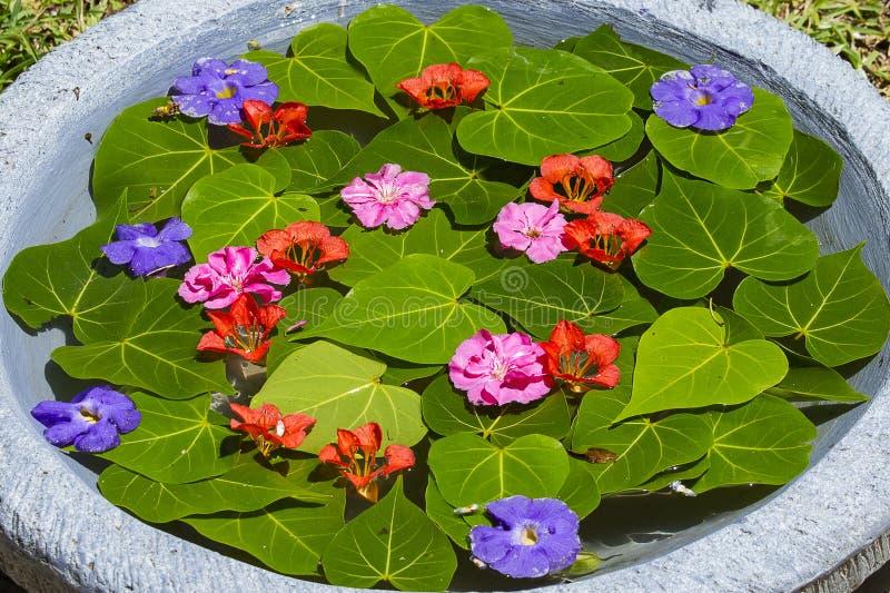 花瓶充满水并且用绿色叶子和美丽的花装饰在热带庭院里 海岛毛里求斯 免版税图库摄影