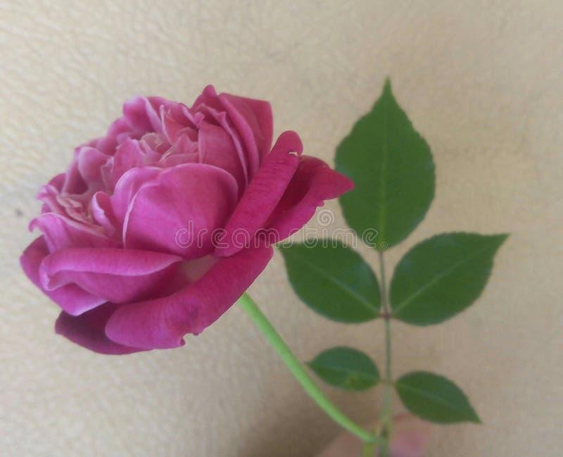 花瓶的时刻!:) 库存照片