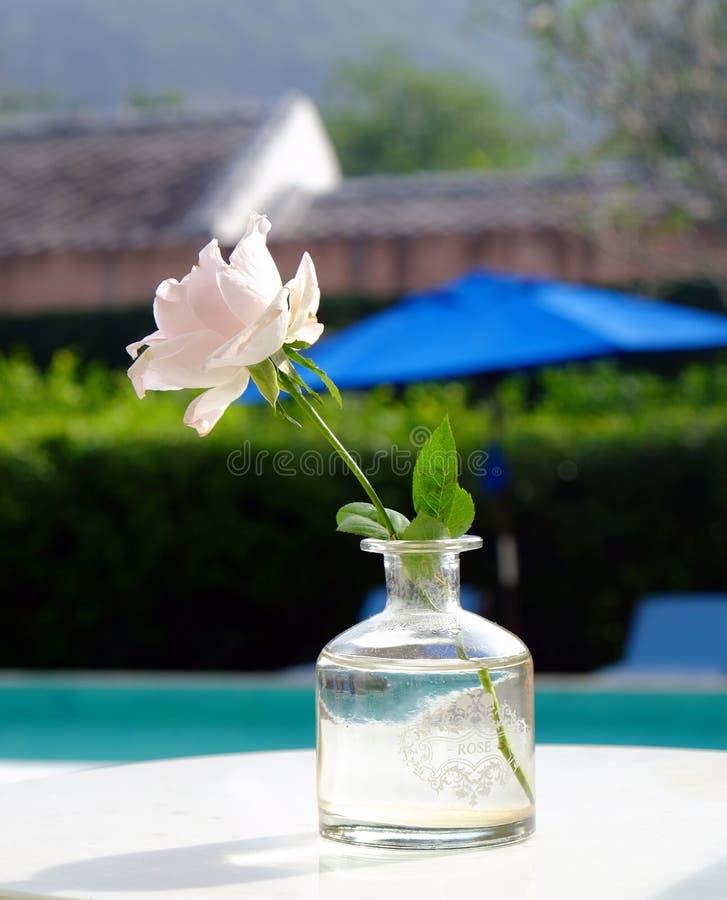 花瓶的桃红色罗斯 库存图片